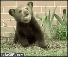 This kid who just won't stop sneezin'.   42 Bear GIFs That Will Give You Life In 2014