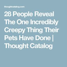 28 People Reveal The One Incredibly Creepy Thing Their Pets Have Done | Thought Catalog