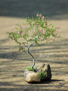 flores de color rosa - 2 de perlas-poeta
