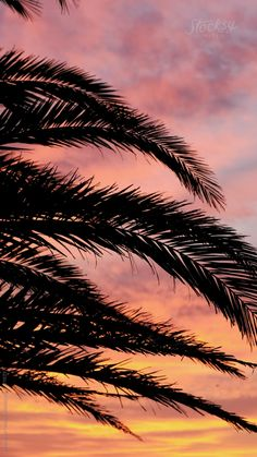 Travel Photography Discover Palm Tree at Sunset A vertical stock video of a palm tree at sunset in Pensacola Beach Florida. Nature Iphone Wallpaper, Ocean Wallpaper, Trippy Wallpaper, Summer Wallpaper, Beautiful Nature Wallpaper, Dark Wallpaper, Palm Tree Sunset, Palm Trees Beach, Beach Tumblr