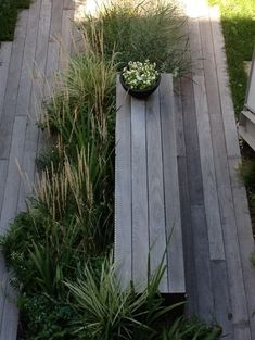 Boardwalk-style bench with grasses -love the mix of soft grasses with weathered timber