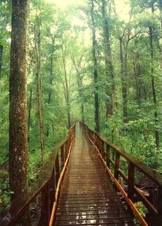 Congaree National Park, South Carolina, United States.