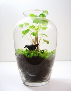 The Fern and Mossery: How to Make a Terrarium. >> Discover more at the image
