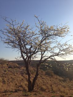 Flora of Namibia - barren mineral rich the Kalahari desert - even Harsher than Australia Diamond Buyer serious investors only +61449849880 www.melbournediamondcompany.com.au