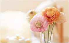 Flower Pink Orange Flower Wallpaper   flower pink orange flower wallpaper 1080p, flower pink orange flower wallpaper desktop, flower pink orange flower wallpaper hd, flower pink orange flower wallpaper iphone