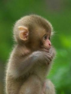 Cute little baby - Silvia v. - Cute little baby Cute little baby - Cute Little Animals, Cute Little Baby, Cute Funny Animals, Baby Animals Pictures, Cute Animal Pictures, Animals And Pets, Cute Monkey Pictures, Wild Animals, Cute Baby Monkey