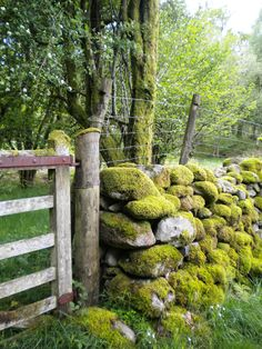 This reminds me of my childhood in Vermont.  I love the rock walls they are so beautiful. I can't say they had as much moss but they were beautiful just the same.