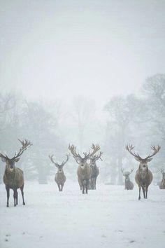 Beautiful & Amazing Animals