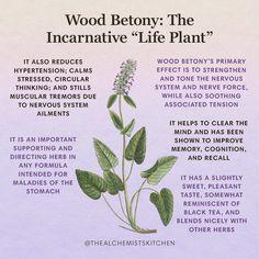 Healing Herbs, Holistic Healing, Medicinal Plants, Natural Healing, Magic Herbs, Herbal Magic, Natural Medicine, Herbal Medicine, Witch Herbs