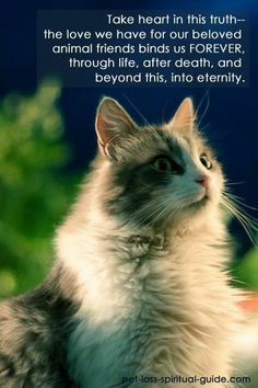 Understanding The Most Common Cat Health Problems - Own Cats Pet Loss Quotes, Cat Quotes, I Love Cats, Crazy Cats, Cute Cats, Westies, Pet Poems, Pet Loss Grief, Pet Remembrance