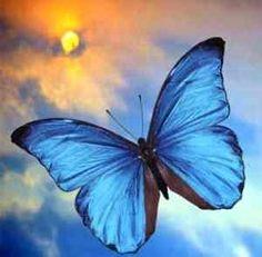 Vlinder : kortstondigheid van het leven