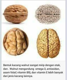 Walnut is a good brain food. The brain food are usually kinds of nut and bean Health And Nutrition, Health Tips, Health Fitness, Good Brain Food, Food Combining, Natural Health Remedies, Natural Medicine, Herbalism, Healthy Lifestyle