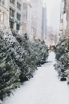 NYC is, and forever will be, the best place (aside from a beautiful mountain cabin) to spend the winter holidays