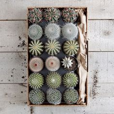 For gardeners, life is like a box of...cacti? Send a cacti care package! http://blog.hgtvgardens.com/garden-get-cacti-care-package/?soc=pinterest
