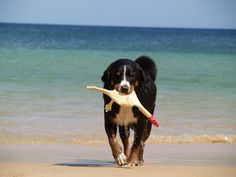 Funny dog at the beach