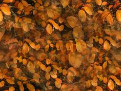 Herbstlaub als Hintergrund oder Tapete Web Design, Painting, Art, Pictures, Autumn Leaves, Photomontage, Wallpapers, Stones, Art Background