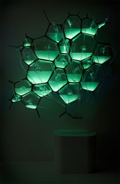 Microbial Home by Philips