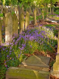 Southern Cemetery by Tim Birch, via Flickr