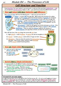 Cell Biology Notes, Biology Revision, Study Biology, Biology Lessons, Biology Teacher, Teaching Biology, Biology College, Science Revision, College Teaching
