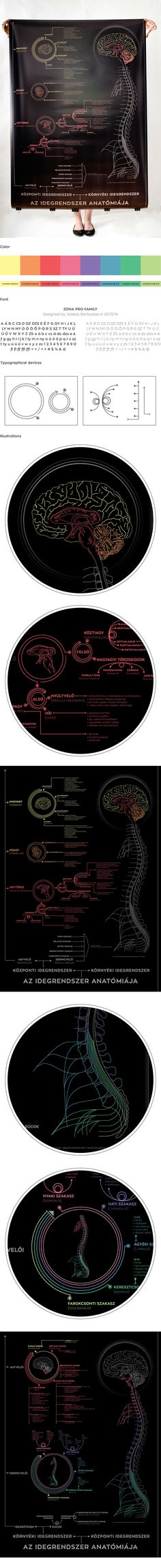 """Check out my @Behance project: """"Infoposter: Anatomy of the nervous system"""" https://www.behance.net/gallery/42611193/Infoposter-Anatomy-of-the-nervous-system"""