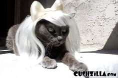 Cat Wig / Dog Wig: Cushzilla Lady Gaga Wig in Poker Face Platinum from Cushzilla! www.cushzilla.com
