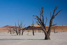 Dead Vlei Le désert de Namibie  Le marais mort