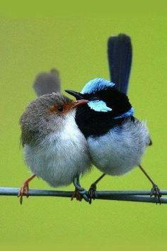 https://www.facebook.com/BirdsWorld.0fficial/photos/a.872858989527181.1073741828.872854769527603/1300494073430335/?type=3&theater