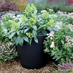 Graphite Cirkik Planter really shows off the different shades of green.  Plant pot available from @plantfinderpro https://plantfinderpro.com/couture-planters/