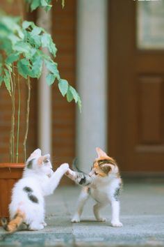 "Kitty ""high five"""