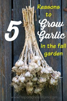 Quick To Build Moveable Greenhouse Options 5 Reasons To Grow Garlic In Your Fall Garden Preparednessmama Growing Herbs, Growing Vegetables, Fall Planting Vegetables, Planting Garlic In Fall, Container Gardening, Gardening Tips, Organic Gardening, Vegetable Gardening, Sustainable Gardening