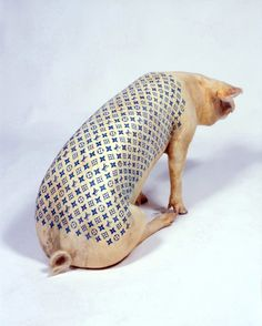Wim Delvoye - tatooed pig