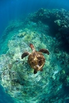 In this picture it is a Sea Turtle in the ocean this picture is kind of special cause my grandma loves sea Turtles and I love my grandma. I would be sad if my grandma died. I am sure everyone is like that with their grandmas. In the world everyone cares about theirs grandmas.