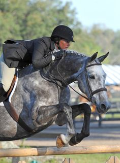 AHHH!! My dream horse a hunter and a dapple grey! <333333 Perfect.  End of story.