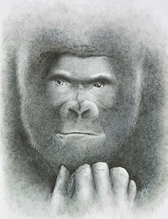 Silverback Gorillas - strong, intense, fiercely protective. A beautiful ink rendering of one of the most spectacular animals on the earth Silverback Gorilla, Canadian Artists, Ink Art, Original Artwork, Strong, Earth, Prints, Animals, Beautiful