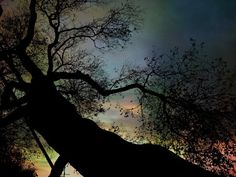 Night Fall by The Tree Pro Photo Print 85 X 11 by BRGproductions, $18.00