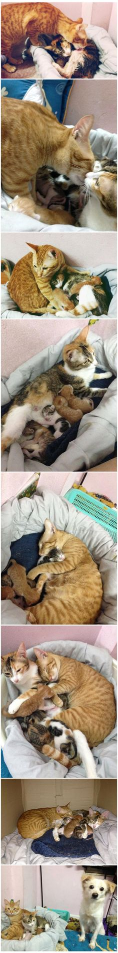 Husband cat supports his wife during and after labor - 9GAG