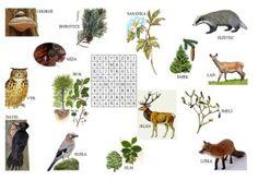 osmismerky School, Nature, Autism, Naturaleza, Schools, Nature Illustration, Outdoors, Natural