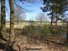 Duerswâldmer Heide -