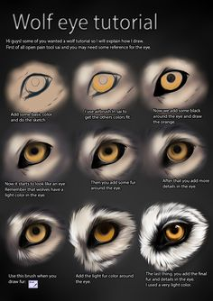 How I paint dog eyes, cause I know a few people were interested I hope you find it useful Painted from scratch in Adobe Photoshop with a Wacom Tablet. References of my dogs eyes were used. Wolf Eye Drawing, Realistic Eye Drawing, Drawing Eyes, Digital Painting Tutorials, Digital Art Tutorial, Art Tutorials, Werewolf Eyes, Wolf Sketch, Wolf Painting