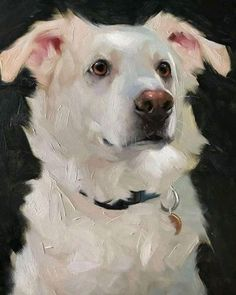 Art by Jennifer Gennari 🎨 This is Humphrey 🐾 --------------------------------------- Check out: 😳🔥… Animal Paintings, Animal Drawings, Art Drawings, Art And Illustration, Illustrations, Dog Portraits, Portrait Art, Wal Art, Afrique Art
