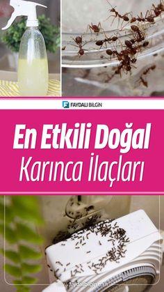 Evde karınca nasıl gider? İşte en etkili doğal karınca ilaçları Homemade Face Masks, Water Bottle, Drinks, Istanbul, Home Face Masks, Drinking, Beverages, Water Bottles, Drink