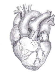 Human Heart Pencil Drawing Heart Drawing Heart Pencil Drawing Human Heart Sketch Liner Stock Vector Illustration Of Drawing How To Heart Pencil Drawing, Human Heart Drawing, Pencil Art Drawings, Art Sketches, Broken Heart Drawings, Broken Heart Art, Real Heart Tattoos, Anatomical Heart Drawing, Human Painting