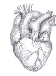 Google Image Result for http://www.deviantart.com/download/52998003/Human_Heart_by_Mutantenmaid.jpg