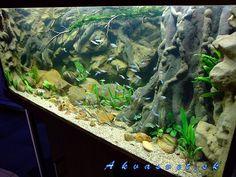 diy planted aquarium background - Google Search