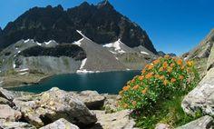 #fiori #montagna #acqua #WorldWaterday #water