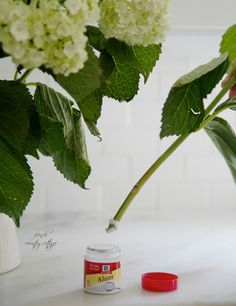 hydrangeas, fresh, kitchen, sink, alum--cut stems, dip directly in alum and place in water--extends life of hydrangeas