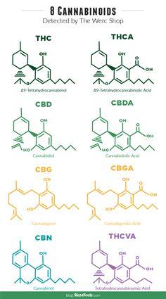 molecules_blog-1-10                                                                                                                                                                                 More