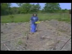 synergistic garden - Emilia Hazelip - A Fukuoka Inspired Permaculture Garden Farming Techniques, Natural Farming, Urban Farmer, Back To Basics, Fukuoka, Our Planet, Permaculture Garden, Gardening, Horticulture