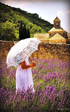 Sénanque Abbey lavender field in Provence, France.