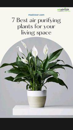 Indoor Flowering Plants, Best Indoor Plants, Indoor Garden, Garden Plants, Inside Plants, Cool Plants, House Plants Decor, Plant Decor, Best Plants For Bedroom